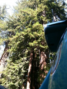 Redwood hinter GP